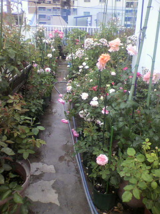 P1006737切花種コーナー6