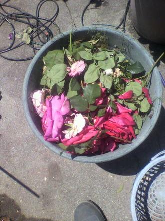 P1009443花柄摘み
