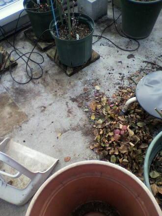 落葉の掃除