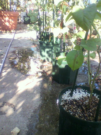 P1003599切花種苗の移動