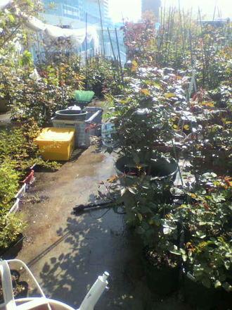 P1008059水やり風景東