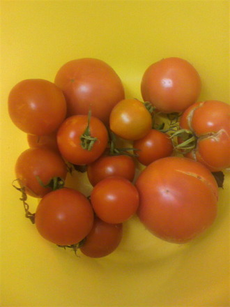 P1009268トマト収穫10月25日