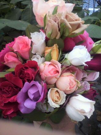 P1003216切花種の花摘み