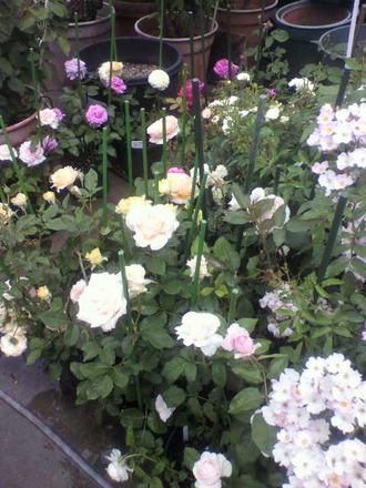 P1006741切花種コーナー3