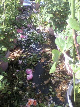 P1008506花柄摘み