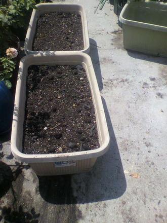 P1009280家庭菜園の準備8月9日