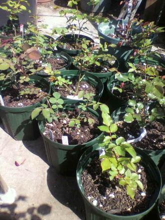 P1005675切花種の手入れ4