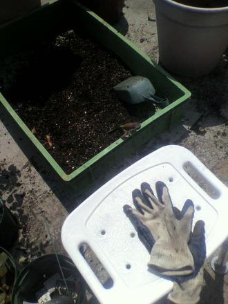P1009281古土で用土を作る8月9日