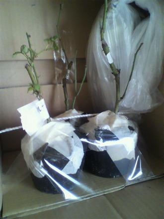 苗の梱包2