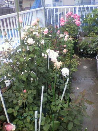 P1006739切花種コーナー4
