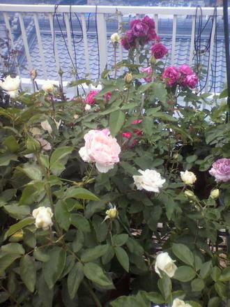 P1006738切花種コーナー5