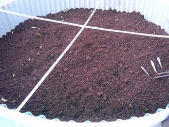 堆肥サイロへ発酵牛糞