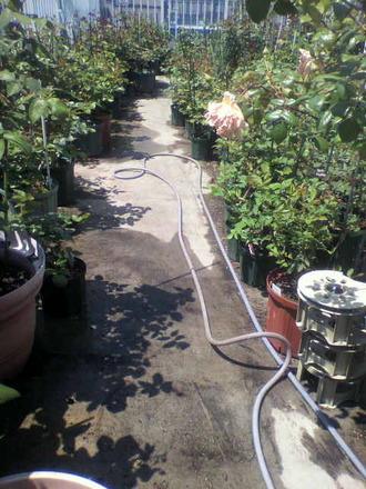 P1008130毎朝の水やり