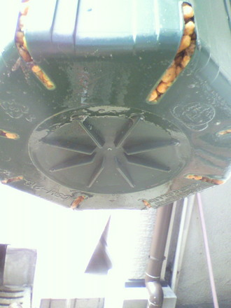 挿し木の鉢底