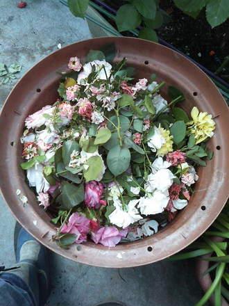 花殻摘み〜
