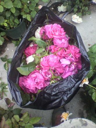 P1006752花柄処分