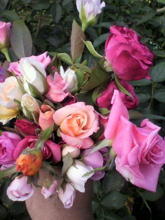 P1003199花摘み3
