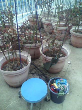 P1007807施肥と芽掻きの同時作業