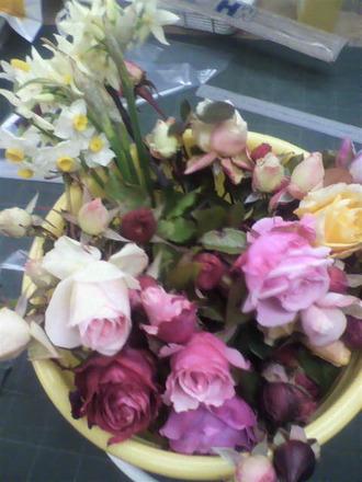 P1009090冬のバラ