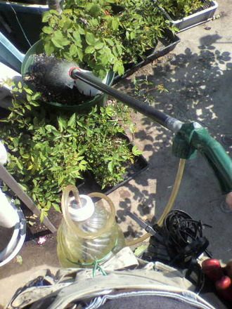P1006244液肥の散布オドラータ挿し木