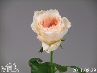 トワ09−071