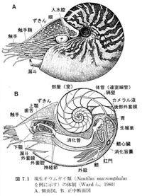 nautilus_anatomy_s[1]
