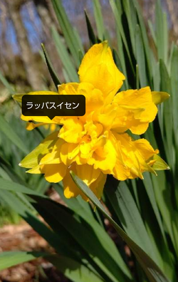 Screenshot_20210508-144916~2