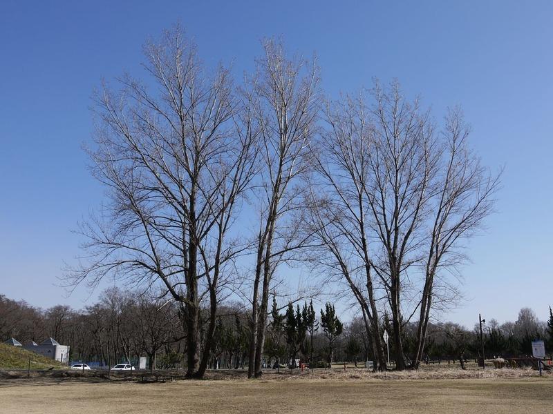 20170221秋ヶ瀬公園P1290696a