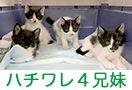 4 cats