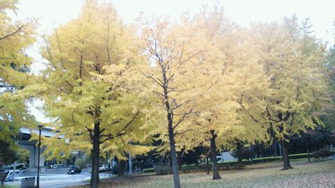 赤塚公園沖山地区紅葉3