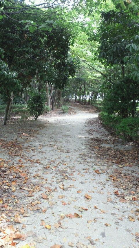 青海緑道公園1