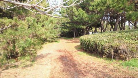 若洲海浜公園サイクリングコース30