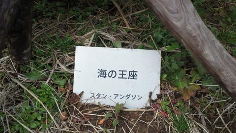 若洲海浜公園サイクリングコース12海の王座 (2)
