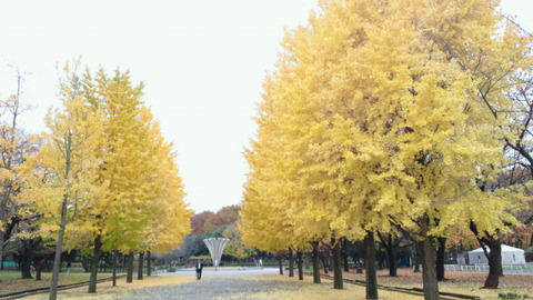 赤塚公園中央地区紅葉1