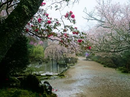 吉野山 一目千本吉野桜 (1)