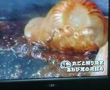 あわび茸の肉詰め03