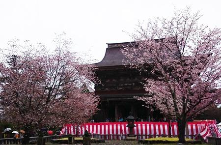 吉野山 一目千本吉野桜 (8)