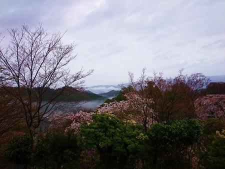 吉野山 一目千本吉野桜 (4)