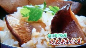 あわび茸 滋賀県足太あわび茸 青空レストラン (36)