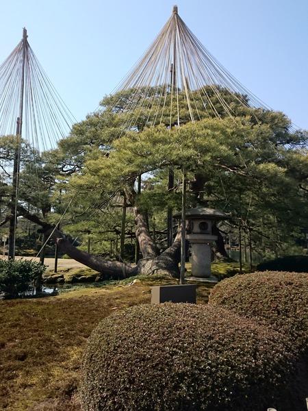 金沢 兼六園 (5)