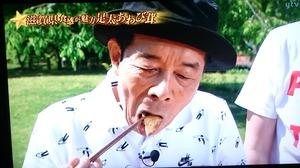 あわび茸 滋賀県足太あわび茸 青空レストラン (15)