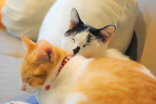 保護猫、兄弟猫が寝ているところ