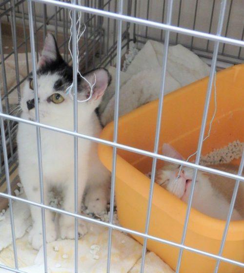 動物保護施設の猫たち