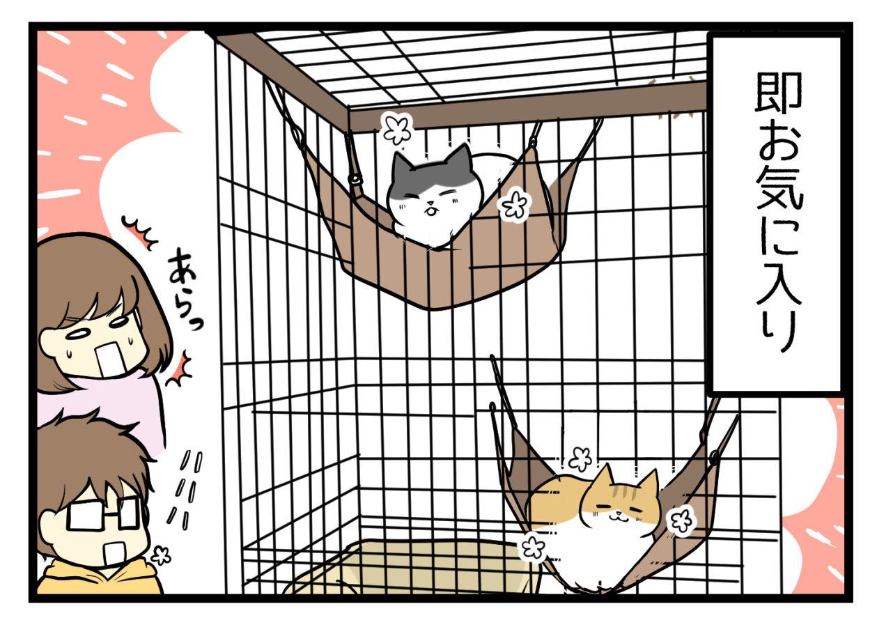 猫のハンモックがお気に入り