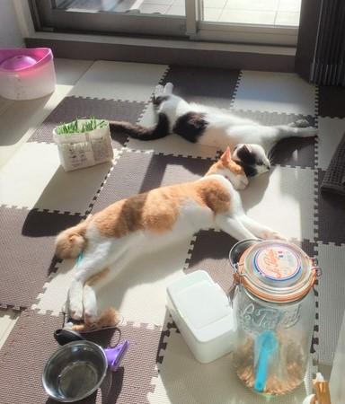 ヤタナギ(猫の画像)