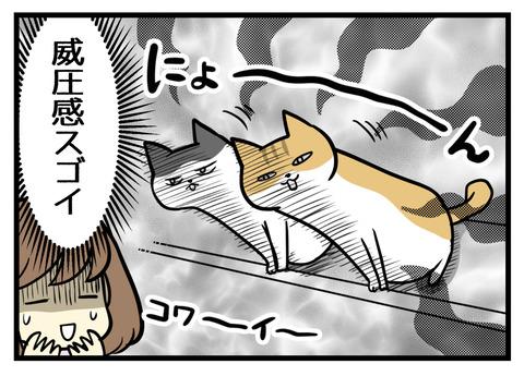 そして今、猫たちはカウンターからシンク側に頭をぐいーんとせり出した姿勢でいることが多いです。この威圧感がスゴイです。