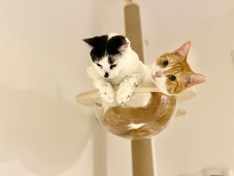 ひしめき合う猫