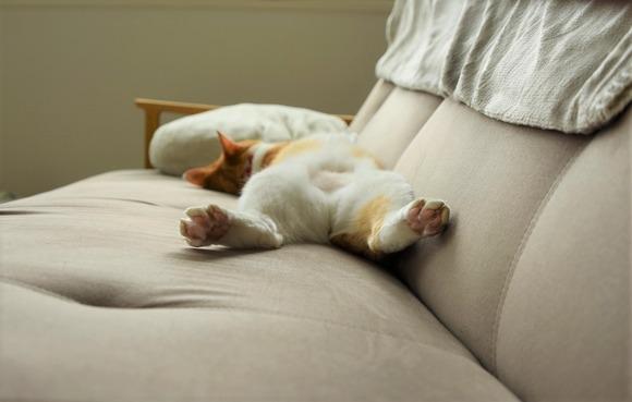 よく寝るナギ