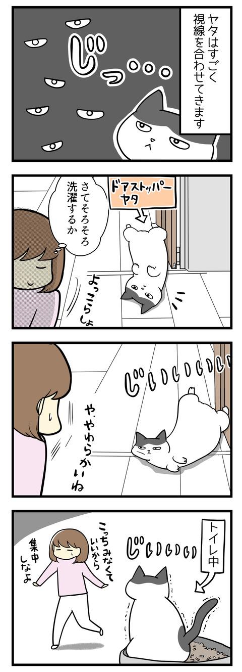 猫のヤタは視線をすごく合わせてきます。立ち上がったときはもちろん猫がトイレの最中にもいつでも。