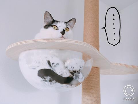 ビビリ猫ヤタ